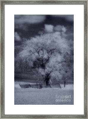 Silence Of Nature Framed Print by Cathy  Beharriell