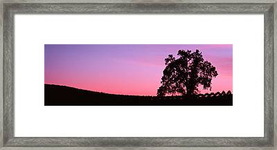 Silhoutte Of Oaktree In Vineyard, Paso Framed Print by Panoramic Images