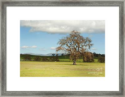 Silicon Valley Hills Framed Print by Artist and Photographer Laura Wrede