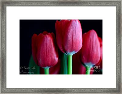 Silky Smooth Tulips Framed Print by Tracy  Hall
