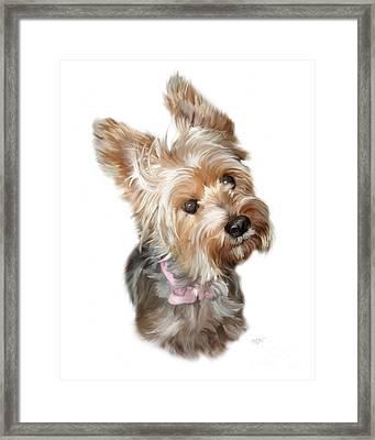 Silky Terrier Framed Print by Paul Tagliamonte