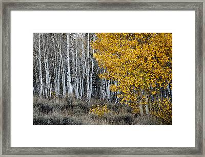 Silver And Gold Framed Print by Cat Connor