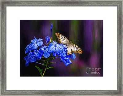 Silver And Gold Framed Print by Lois Bryan