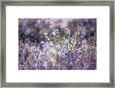 Silver Grass 1. Small Natural Wonders Framed Print by Jenny Rainbow