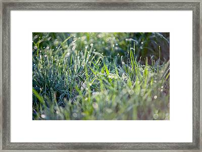 Silver Grass 2. Small Natural Wonders Framed Print by Jenny Rainbow