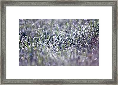 Silver Grass. Small Natural Wonders Framed Print by Jenny Rainbow