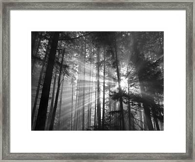 Silver Light Framed Print by Diane Schuster