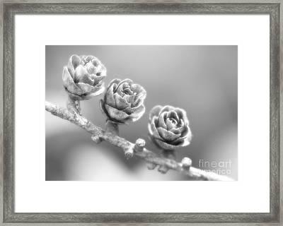 Silver Lining.... Framed Print by Nina Stavlund