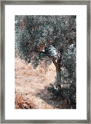 Silver Olive Tree. Nature In Alien Skin Framed Print by Jenny Rainbow