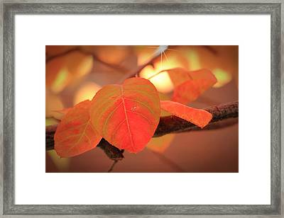Silverberry Leaf Framed Print by Andrea Kappler