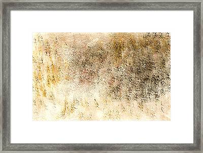Simple Beauty In A Delicate Balance Framed Print by David  Seacord