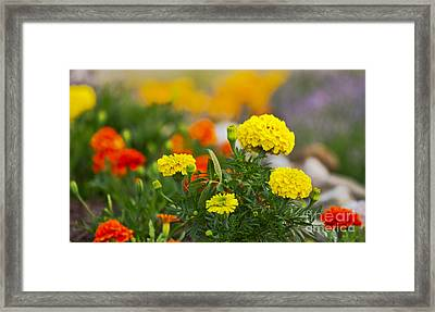 Simple But Beauitful Framed Print by Timothy J Berndt