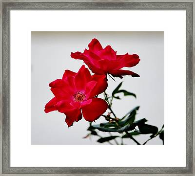 Simple Flowers Framed Print by Cynthia Guinn