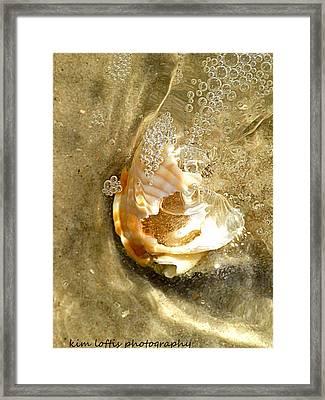 simple Shell  Framed Print by Kim Loftis