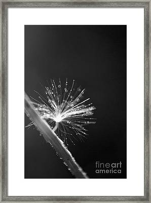 Simpliest Beauty - Bw Framed Print by Aimelle