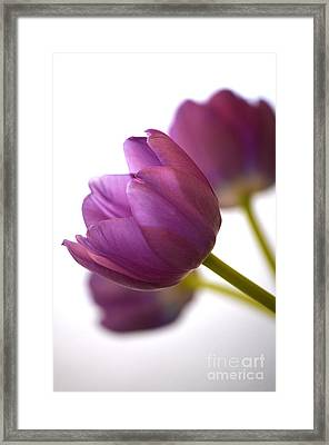 Simply Purple Framed Print by Deb Halloran