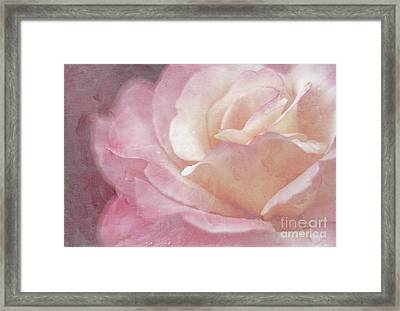 Simply Rose Framed Print by Darren Fisher
