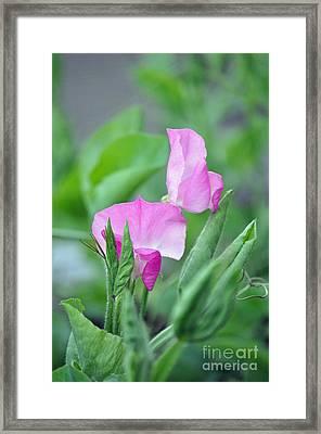 Simply Sweet Framed Print by Gwyn Newcombe