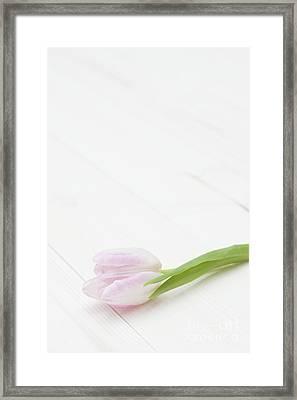 Simply Tulip Framed Print by Anne Gilbert