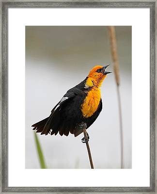 Sing A Song Framed Print by Athena Mckinzie