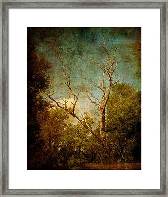 Sing No Sad Songs For Me Framed Print by Roman Solar