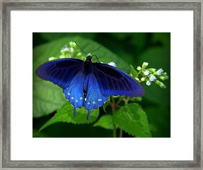 Singing The Blues Framed Print by Karen Wiles