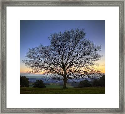 Single Bare Winter Tree Against Vibrant Sunset Framed Print by Matthew Gibson
