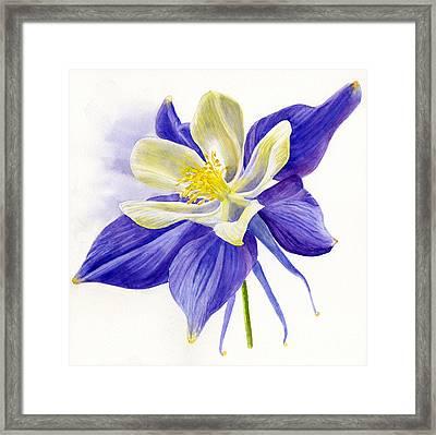Single Blue Columbine Framed Print by Sharon Freeman