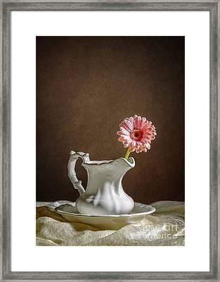 Single Gerbera Flower Framed Print by Amanda And Christopher Elwell