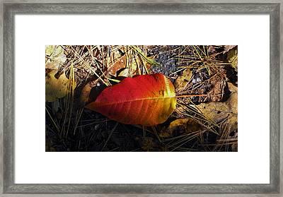 Single Leaf Framed Print by Michael Saunders