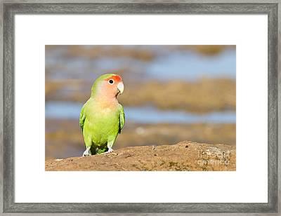Single Love Bird Seeks Same Framed Print by Bryan Keil