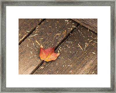Single Maple Leaf Framed Print by Photographic Arts And Design Studio