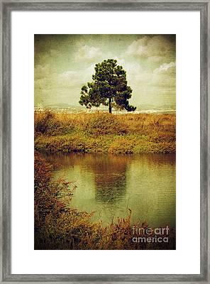 Single Pine Tree Framed Print by Carlos Caetano