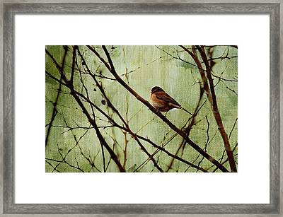 Sittin' In A Tree Framed Print by Rebecca Cozart