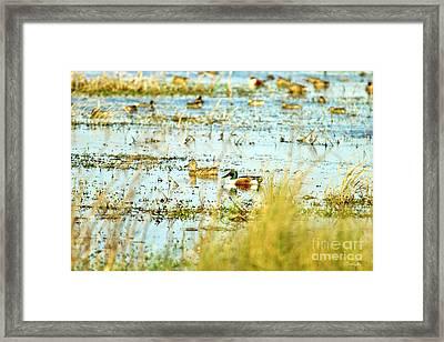 Sitting Ducks Framed Print by Scott Pellegrin