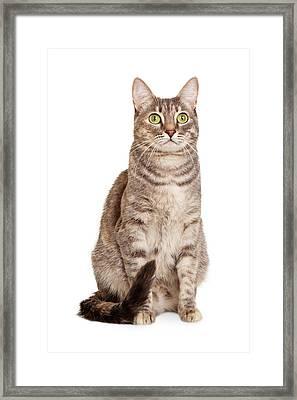 Sitting Gray Tabby Cat Framed Print by Susan  Schmitz