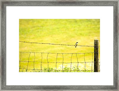 Sitting On A Wire Framed Print by Karol Livote