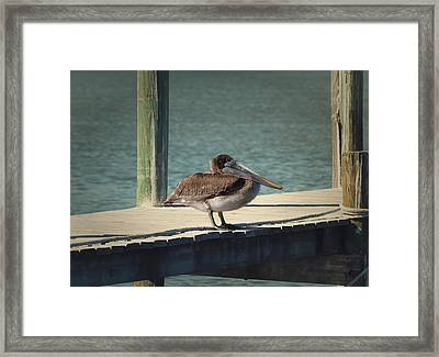 Sitting On The Dock Of The Bay Framed Print by Kim Hojnacki