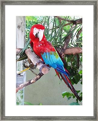 Sitting Pretty Framed Print by Julie Wilcox
