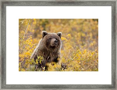 Eat Free Framed Print featuring the photograph Sitting Smug by Tim Grams