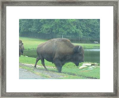 Six Flags Great Adventure - Animal Park - 121213 Framed Print by DC Photographer