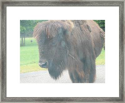 Six Flags Great Adventure - Animal Park - 121215 Framed Print by DC Photographer
