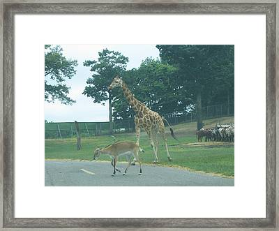 Six Flags Great Adventure - Animal Park - 121239 Framed Print by DC Photographer