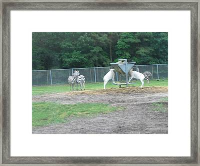 Six Flags Great Adventure - Animal Park - 121247 Framed Print by DC Photographer