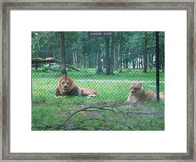 Six Flags Great Adventure - Animal Park - 121253 Framed Print by DC Photographer
