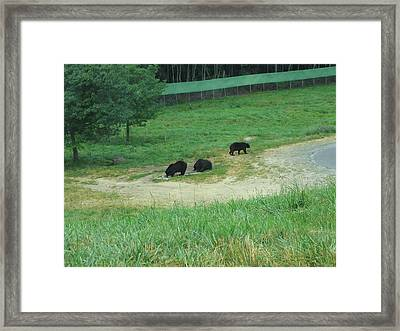 Six Flags Great Adventure - Animal Park - 121255 Framed Print by DC Photographer