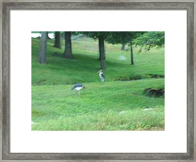 Six Flags Great Adventure - Animal Park - 121259 Framed Print by DC Photographer