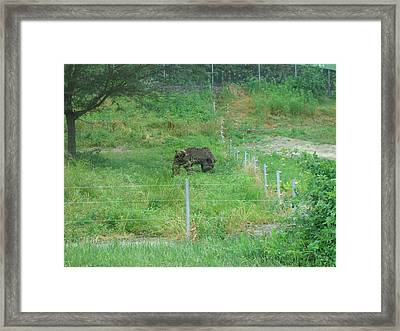 Six Flags Great Adventure - Animal Park - 121260 Framed Print by DC Photographer