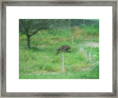 Six Flags Great Adventure - Animal Park - 121261 Framed Print by DC Photographer