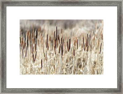 Skagit River Delta, Washington State Framed Print by Matt Freedman